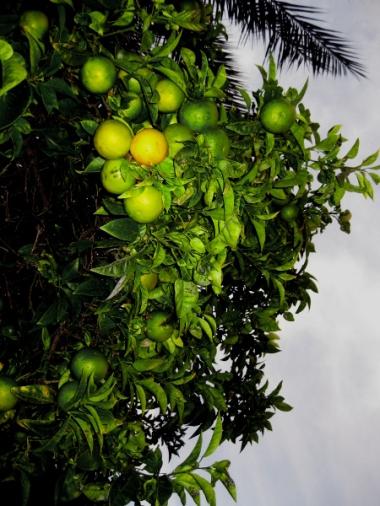 Orangen © Kruth 2014